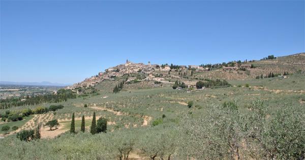 Fascia pedemontana olivata Assisi - Spoleto