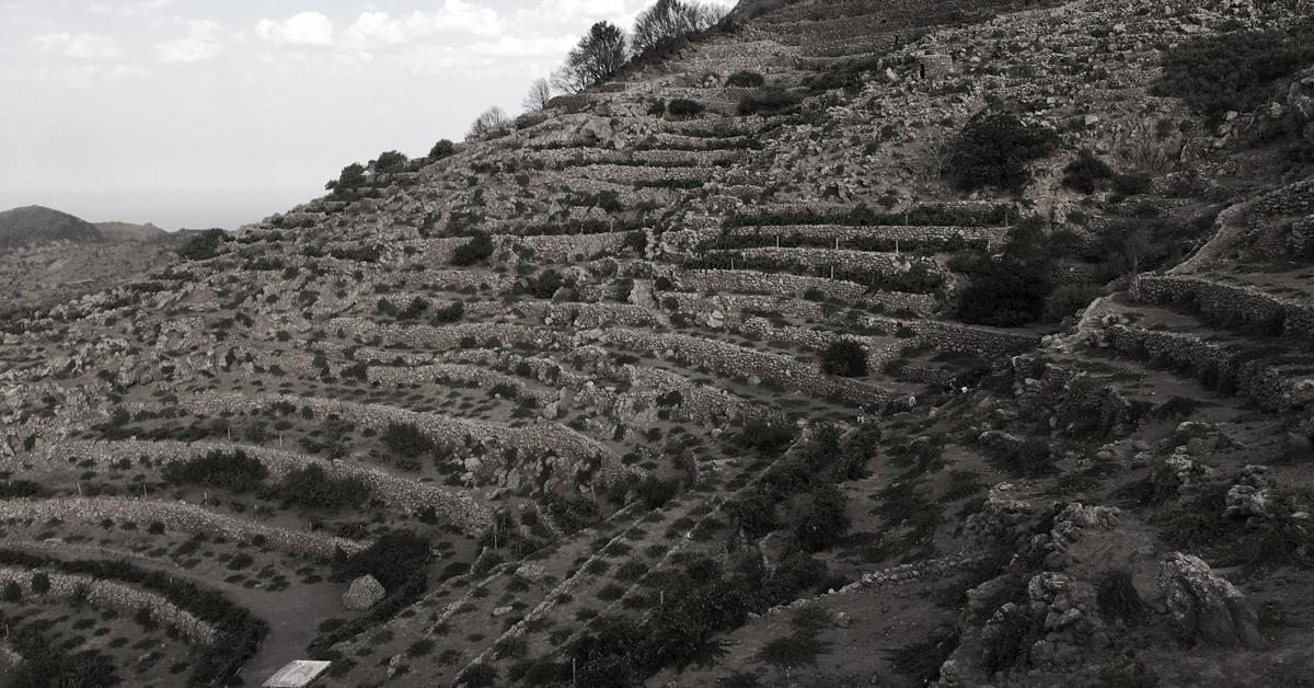 Paesaggio della Pietra a Secco dell'Isola di Pantelleria