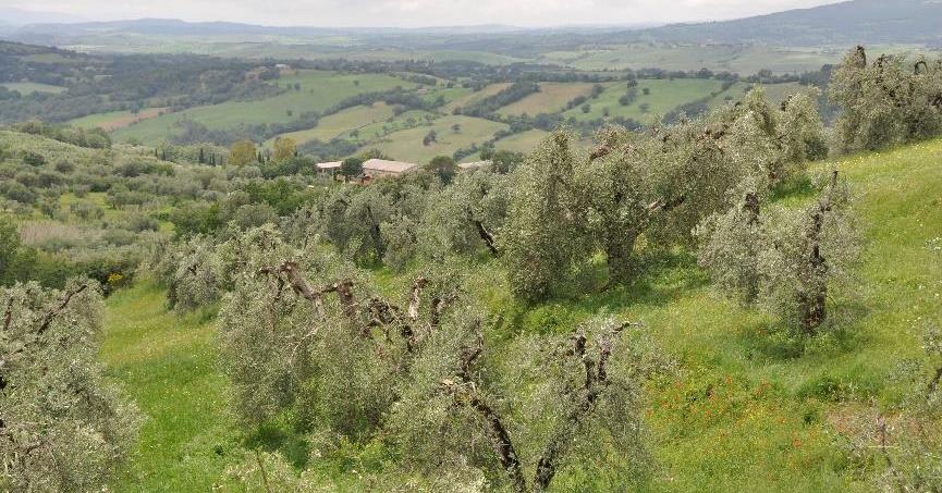 Paesaggio Policolturale di Fibbianello - Comune di Semproniano