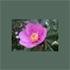 Logo GAL Barbagia Mandrolisai Gennargentu Supramonte