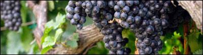 Agricoltura biologica, i primi risultati della Rete 2014-2020